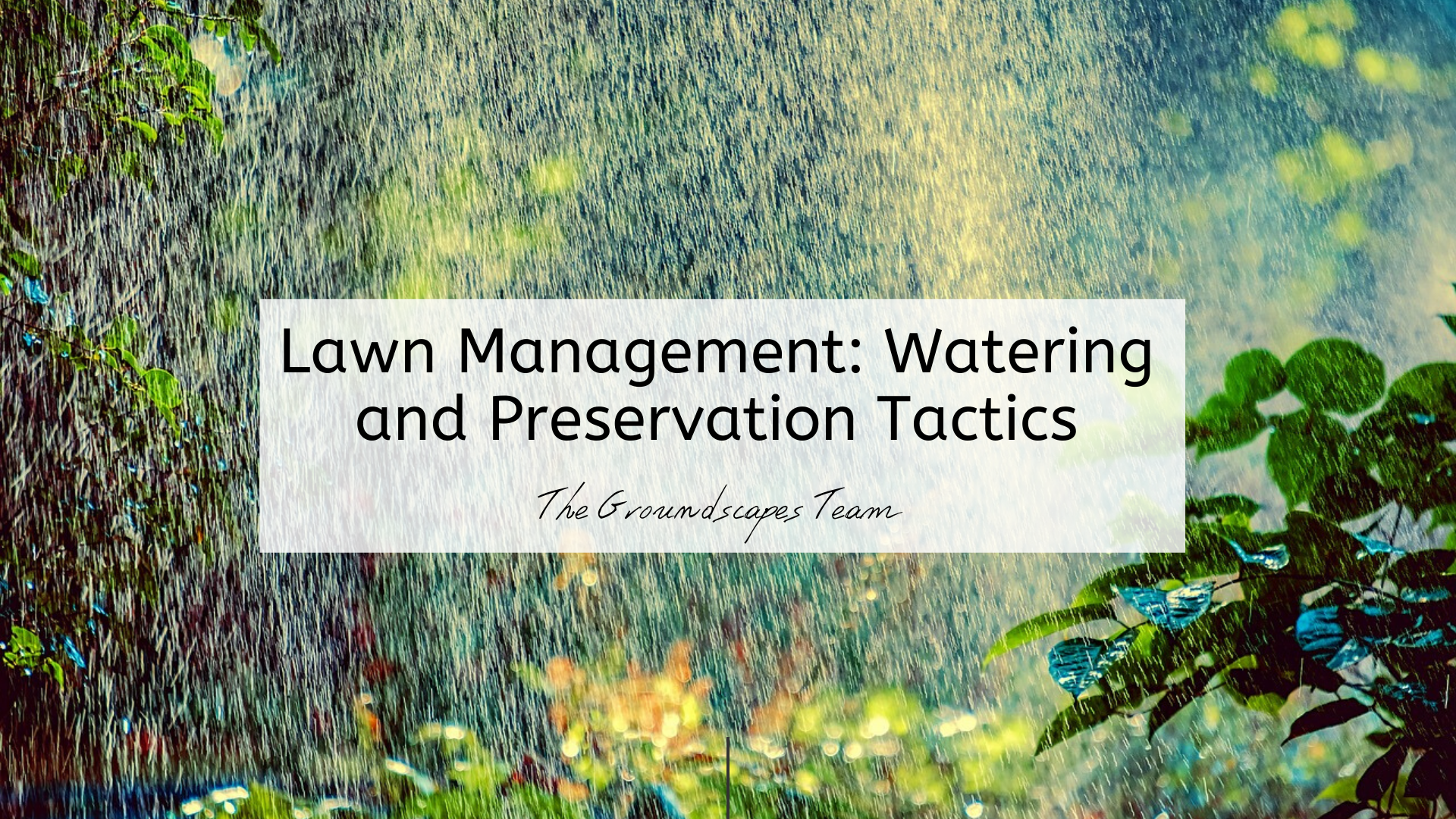 Basic Lawn Management: Watering and Preservation Tactics